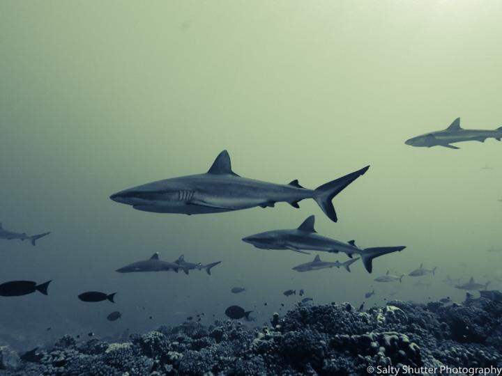 Fakarava Below Water (17 of 18).jpg