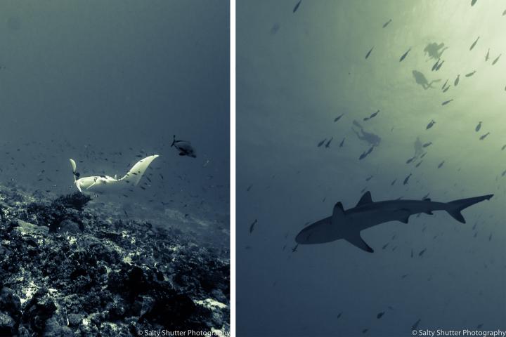 Fakarava Underwater.png