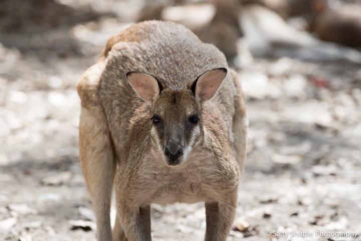 Australia-10.jpg