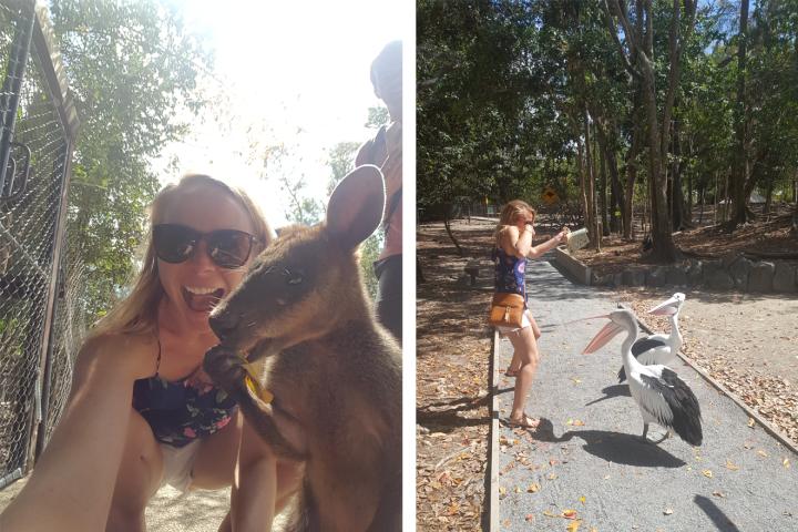 Australia zoo.png