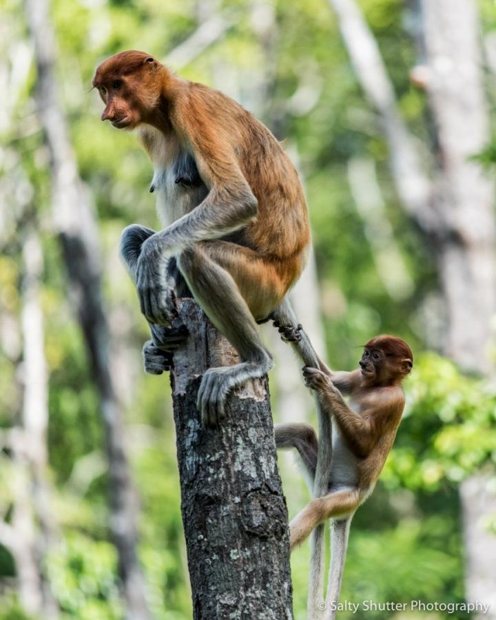Borneo-23