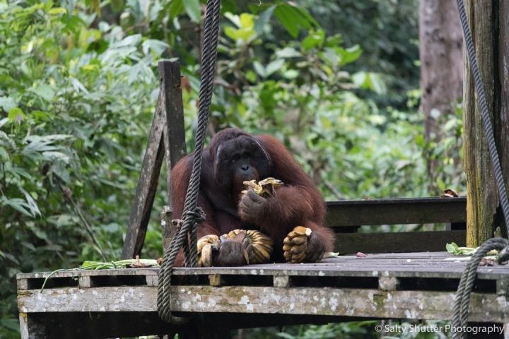 Borneo-27
