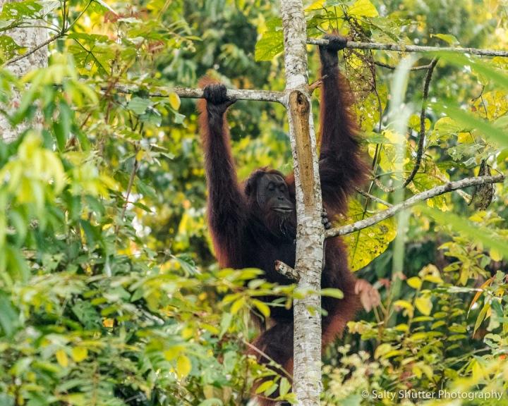 Borneo-29