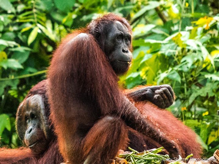 Borneo-8