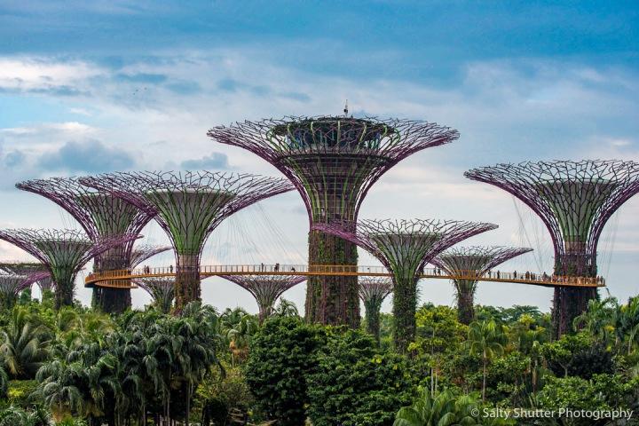 Singapore Slingin'