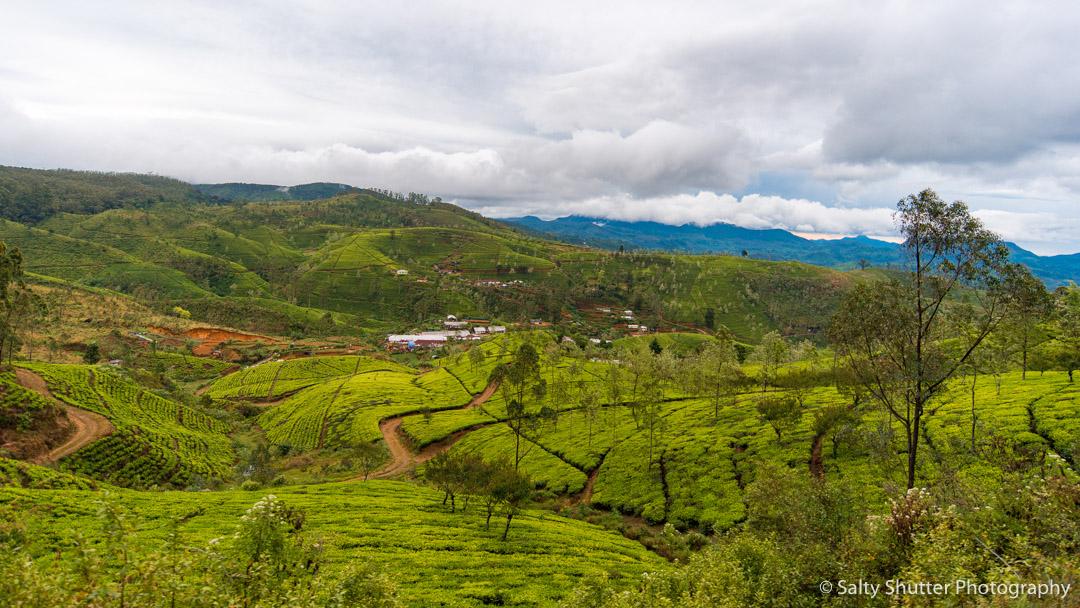 Sri Lanka-39