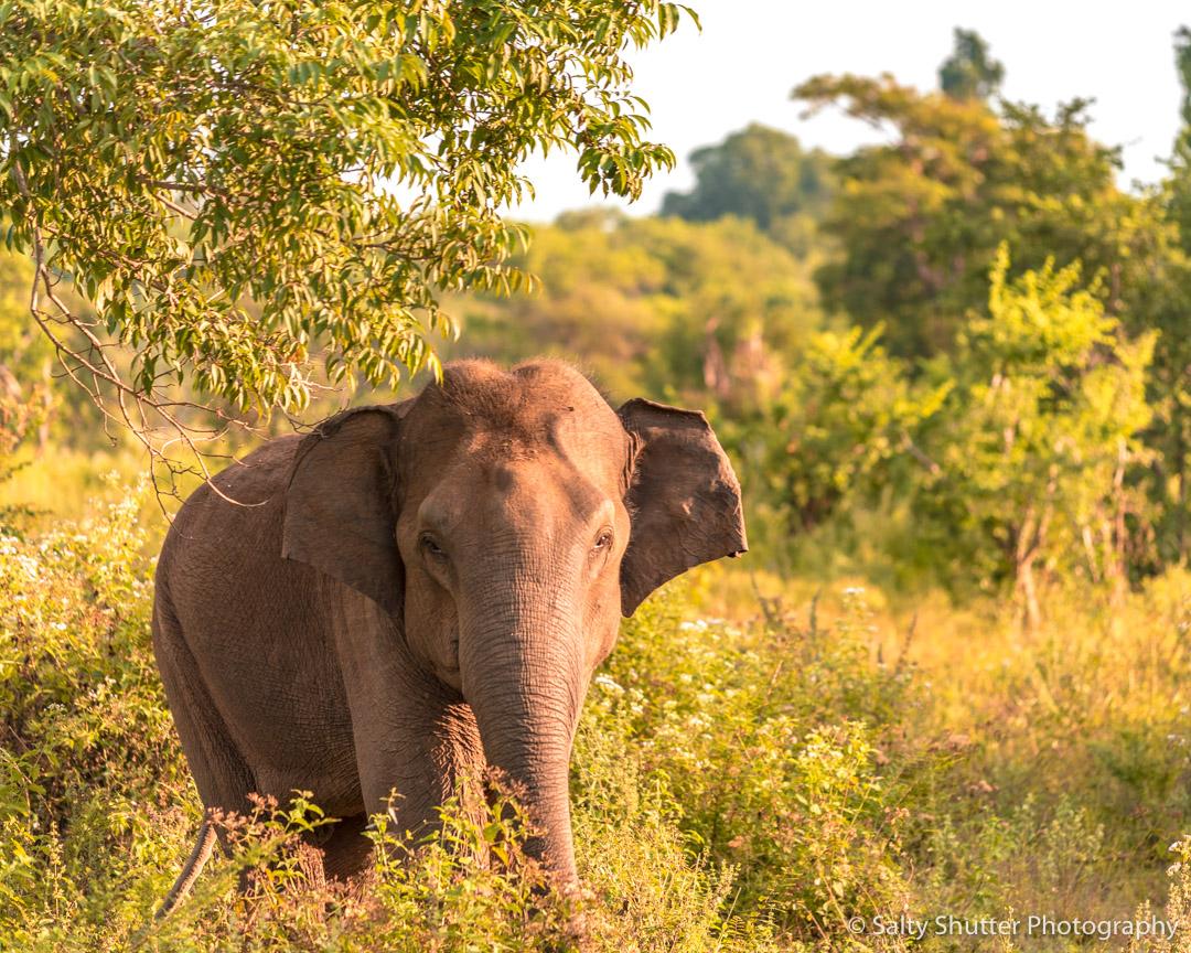 Sri Lanka-76