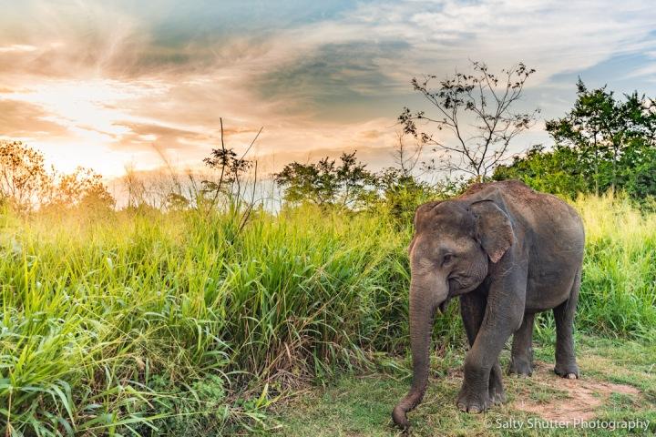 Sri Lanka-77