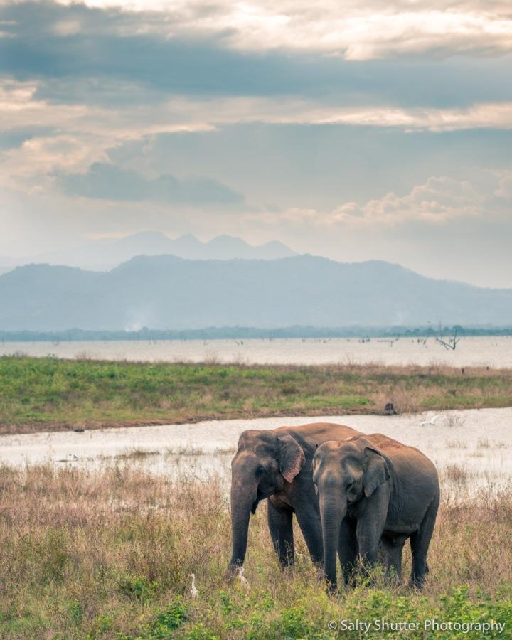 Sri Lanka-84