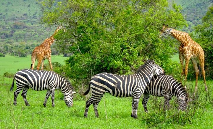 The Wandering Muzungu: RwandaEdition